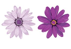Purple Flower Vectors