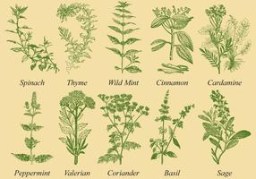 Spices And Herb Vectors