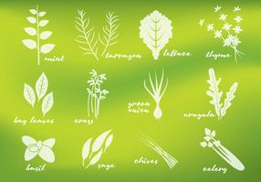 Fresh Greens Vectors