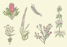 Sketchy Flower Vector Set