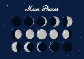 Vector Moon Phase