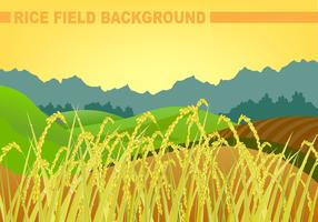 Rice Field Background Vector