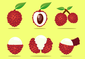 Free Lychee Vector