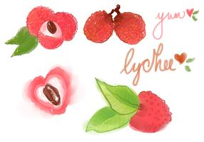 Watercolor Lychee Vector Set