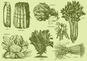Old Style Drawing Vegetables