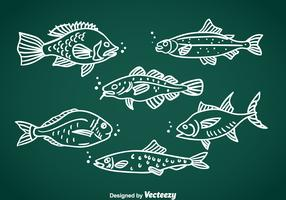 Fish Hand Drawn Vector