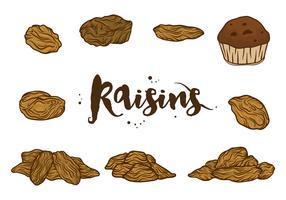 Raisins Vectors