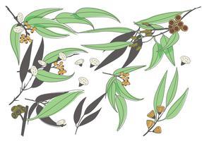 Eucalyptus Vector