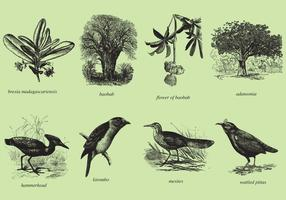 Madagascar Trees And Birds