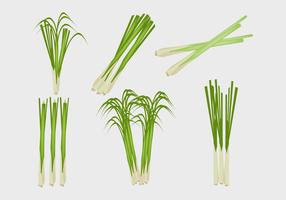 Lemongrass Illustration Vector
