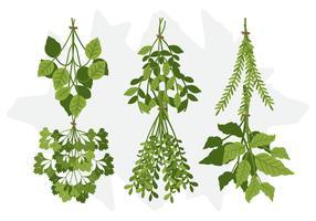 Vector Herb