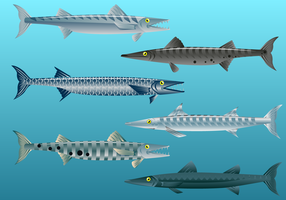 Free Barracuda Fish Vector
