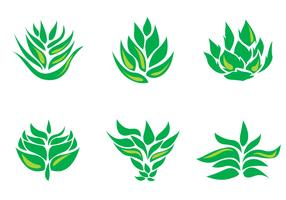 Maguey Vector Icons