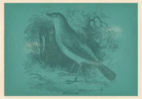 Vinatge Nightingale Illustration
