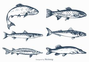 Free Vector Freshwater Fish Set