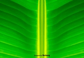 Green Leaf Background - Vector