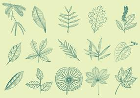 Leaves Drawings