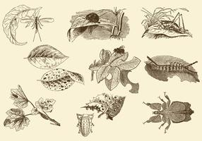 Insects And Leaves