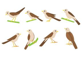 Nightingale Bird Vector Icons