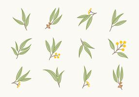 Free Flat Eucalyptus Icons