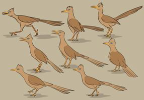 Roadrunner Bird Cartoon Vectors