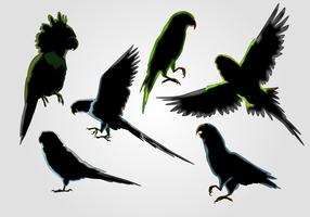 Budgie Silhouette Vector Set