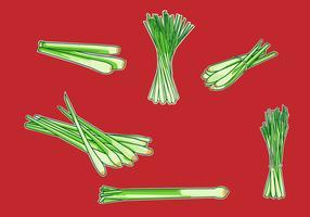 Lemongrass Illustration Vector
