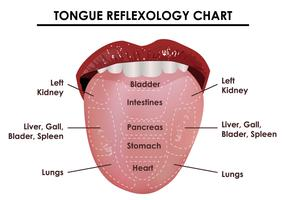 Tongue Reflexology Chart
