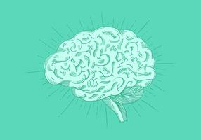 Bright Hand Drawn Brain Vector