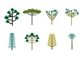 Free Araucaria Trees Vector