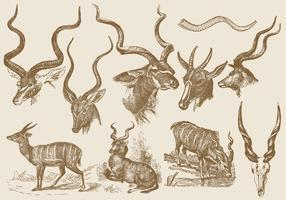 Kudu Drawings