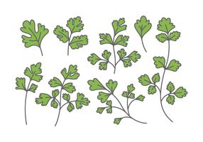 Chinese Parsley Vectors