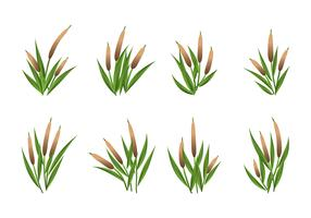 Cattails Vector Set