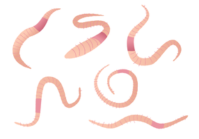 Earthworm Vector Set