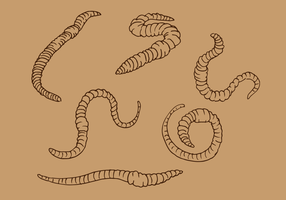 Earthworm Outline Vector