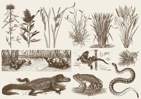 Swamp Fauna And Flora