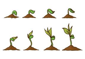 Free Grow Up Plant Vector
