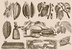 Cocoa Beans And Process