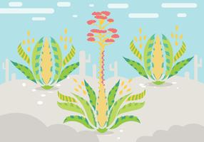 Maguey Illustration Vector