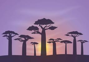 Free Baobab Background Vector
