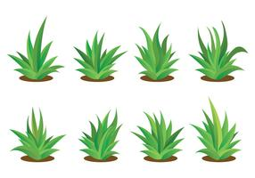 Free Maguey Vector Set