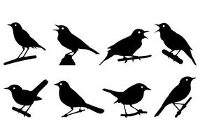 Nightingale Silhouettes Vector