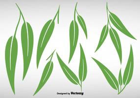 Collection Of Eucalyptus Leaves - Vector