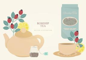 Rosehip Tea Vector Illustration