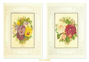 Pansy Vintage Flower Illustrations