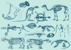 Vintage Animal Skeletons