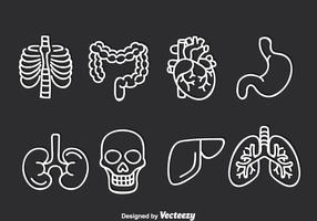 Human Organ Vector Set