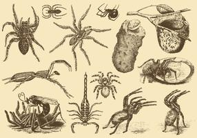 Poisonous Arachnids