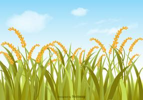 Free Vector Rice Field Illustration