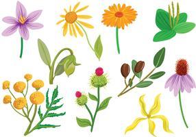 Free Cosmetic Plants Vectors